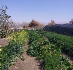 Gardens in the desert