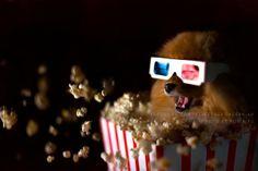 + Fotografia :   Que tal assistir um filme, agora a noite? Foto de Robin Yu.