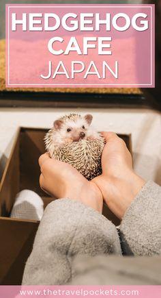 Pinterest Hedgehog Cafe + www.thetravelpockets.com