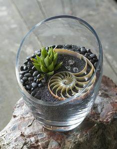 Автор - Сундучок_Вдохновения . Это цитата этого сообщения Маленькие сады Стащила отсюда: Сделай сам. Самый маленький сад Подборка растительных картинок-идей…