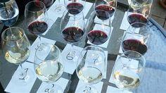 Les #vignerons québécois se préparent à débarquer dans les épicerie!