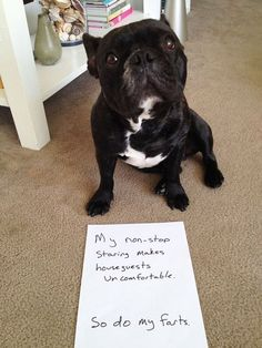 20 hilarious instances when dogs where given the shaming card - Awesomelycute