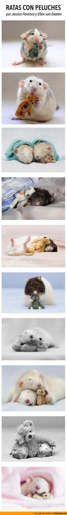Ratas con peluches. Imágenes por Jessica Florence y Ellen van Deelen.