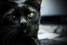 su nombre es Gato