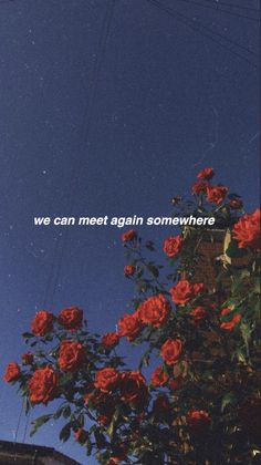 This is a wallpaper aesthetically designed to give you a bit of your favorite song lyrics whenever you look at your phone Sad Wallpaper, Tumblr Wallpaper, Flower Wallpaper, Wallpaper Quotes, Sky Aesthetic, Flower Aesthetic, Aesthetic Vintage, Aesthetic Anime, Aesthetic Backgrounds