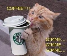 "Onto my second cup....... #caffeine ✮Feel free to share on Pinterest"" ♥ღ #cats WWW.catsandme.com"