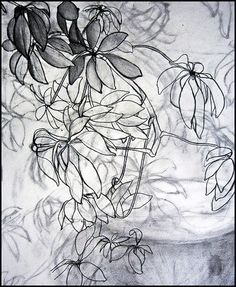Drawing of Plants by Meghan Simon