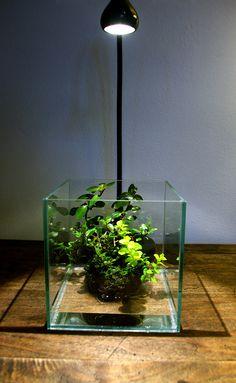 House Plants Decor, Home Garden Plants, Plant Decor, Indoor Garden, Indoor Plants, Moss Garden, Succulents Garden, Water Garden, Aquarium Garden