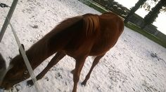 yearling have nothing to do...