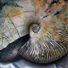 Jo Sheppard - Prepared and Polished # 7 Spiral Art, Seashell Art, Realistic Paintings, Still Life Art, Natural Forms, Organic Shapes, Under The Sea, Fossils, Textures Patterns