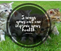 5 Ways your Cat can Improve your Health :http://www.moveloveeat.com/2016/11/28/5-ways-your-cat-can-improve-your-health/