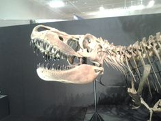 Dinosaur fossils found in Mongolia 20130601