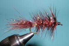 Crystal Bugger, Fiery Brown