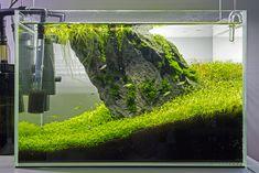Iwagumi - Page 4 - The Planted Tank . Aquarium Aquascape, Planted Aquarium, Aquascaping, Tropical Fish Aquarium, Live Aquarium Plants, Nature Aquarium, Aquarium Fish Tank, Aquarium Store, Home Aquarium