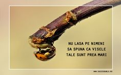 Romanian Language, Motivational Wallpaper, Movie Posters, Wallpapers, Life, Wallpaper, Film Posters, Billboard, Tapestry