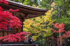 viver-a-viagem-japao-japan-koyasan-monte-koya-mount-koya-04