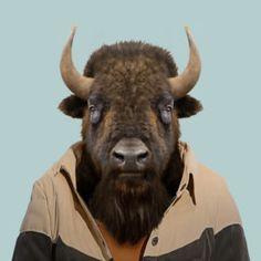 North America Animals » Zoo Portraits