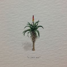 Day 190 : Aloe Vera for my aunt Ruanda (green fingers are just one of the many things that make her amazing). 16 x 28 mm. (at Vredehoek) Detailed Paintings, Mini Paintings, Miniature Paintings, Gouache, South African Artists, Writing Art, Watercolor Sketch, Aloe Vera, Drawings