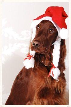 Kerst-setter.