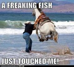 Funny Horse Quotes Touched My Foot - Return to Funny Animal Pictures Home Page Humor Animal, Funny Animal Jokes, Animal Quotes, Cute Funny Animals, Funny Animal Pictures, Cute Baby Animals, Funny Cute, Funny Photos, Hilarious Pictures