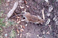 #Rat problem causing summer 'nightmare' for family - Niagara Falls Review: Niagara Falls Review Rat problem causing summer 'nightmare' for…