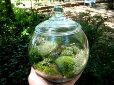 Small Covered Vase, Moss Terrarium,Glass,Lichen and Moss.  Great for HOME or OFFICE. Nice Unusual Gift.  Terrariums by mossterrariums on Ets