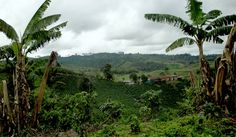 There is no better place to learn about coffee than on a coffee region tour in Colombia where you will visit Valle de Cocora, a coffee plantation and Salento Trip To Colombia, Visit Colombia, Colombia Travel, Ecuador, Cool Places To Visit, Places To Go, Closer To Nature, Famous Places, Countries Of The World