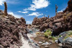 Vale de Cactus - Atacama - Chile