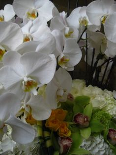 Fresh cut Phalaenopsis orchids with other flowers such as roses and others combined. They still should last a good 10 days. Phalaenopsis Orchid, Orchid Plants, Orchids, Orchid Arrangements, Plant Design, 10 Days, Roses, Fresh, Flowers