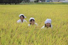 【稲刈り】稲刈り体験、案山子体験の次は稲穂体験でしょうか...。〔写真提供:小松義雄様〕
