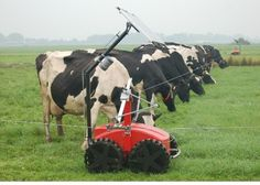 Frontal Grazing the Innovative Way | Farmstyle Australia