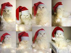 Santa Kitty! Mikulás cica!