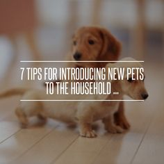 7. Additional Support - 7 Tips for Introducing New Pets to the Household ... → Lifestyle