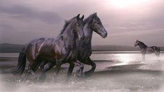 computer wallpaper for horse