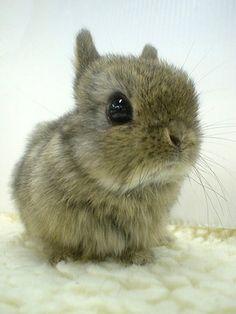 bunnies   Tumblr