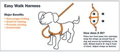 Easy Walk Harness helps stop a dog from pulling. The secret is the ring is in the front.