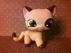 Cocoa Brown Short Hair Cat * OOAK Hand Painted Custom Littlest Pet Shop #Hasbro