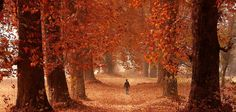 Kashmir's stunning, fiery, and forlorn autumn is missing its tourists this year