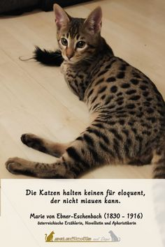 Ja, so könnte man meinen 🤗  #katze #sprüche #lustig Serval, Cattery, Savannah Chat, Dogs, Animals, Sunday, Funny, Animales, Animaux