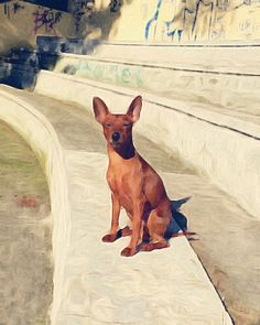 Min Pin Art / Brushstroke - Miniature Pinscher