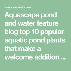 Aquascape pond and water feature blog top 10 popular aquatic pond plants that make a welcome addition to any water garden or pond!