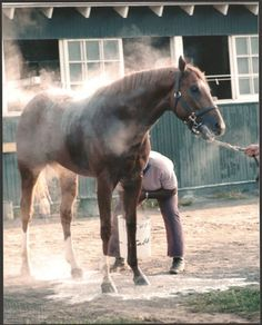 Secretariat in 1973 getting a bath at Belmont Park. Look at his bone & all his hooves compared to the fragile 3 year olds today.