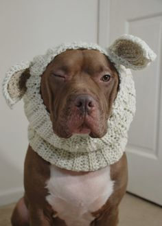Dog Snood Lamb Crochet Made to Order by courtanai on Etsy,