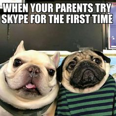 Post with 13443 votes and 459888 views. Tagged with funny, cute, dogs, memes, aww; Shared by dog memes that will make your day Pug Meme, Funny Dog Memes, Funny Animal Memes, Funny Animal Pictures, Funny Dogs, Cute Dogs, Funny Animals, Cute Animals, Funny Pet Quotes