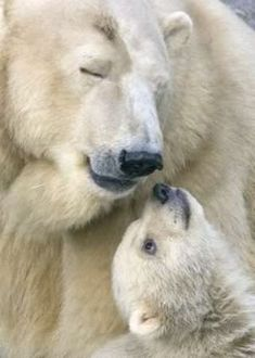 Polar Bear Mama & Her Baby-my favorite animal