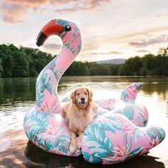 "66.9K vind-ik-leuks, 570 reacties - DogsOf (@dogsofinstagram) op Instagram: '""Aspen portraying her inner @taylorswift on a flamingo float. Dog days of summer!"" writes…'"