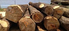 #Wood #dealers in Ernakulam. We have years of experience in wood supplier industry and deliver prompt service.