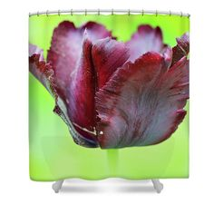 Tulip Shower Curtain featuring the photograph Gorgeous Dark Macro Tulip Over Green Background by Anna Maloverjan   #AnnaMaloverjanFineArtPhotography #ArtForHome #FineArtPrints #FramedPrints #CanvasPrints #MetalPrints #AcrylicPrints #WoodPrints #Prints #Posters #Photography #InteriorDesign #Spring #Flowers #Flower #Tender #Tulip #Macro