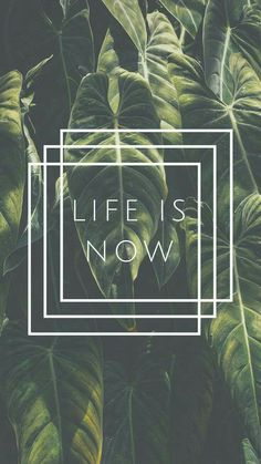 Life is Now Quote iPhone 7 Plus Wallpaper / Tap to downloa d for free! Tumblr Wallpaper, Iphone 7 Plus Wallpaper, Iphone 7 Wallpapers, Wallpaper For Your Phone, Of Wallpaper, Screen Wallpaper, Cute Wallpapers, Positive Wallpapers, Macbook Wallpaper