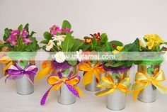 Aranjament floral Martie cu primule in galetusa decor 8 Martie, Planter Pots, Design, Decor, Decoration, Decorating, Deco